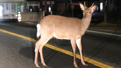 富士山山麓野生動物交通事故対策プロジェクト
